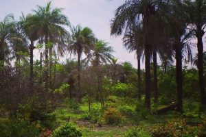 Eco-villaggio Nioko Bokk: il progetto Renken in Casamance